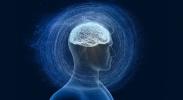 NeuroBLAST brain dissection image